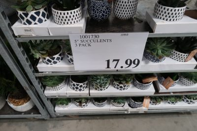 succulent planters at costco wholesale
