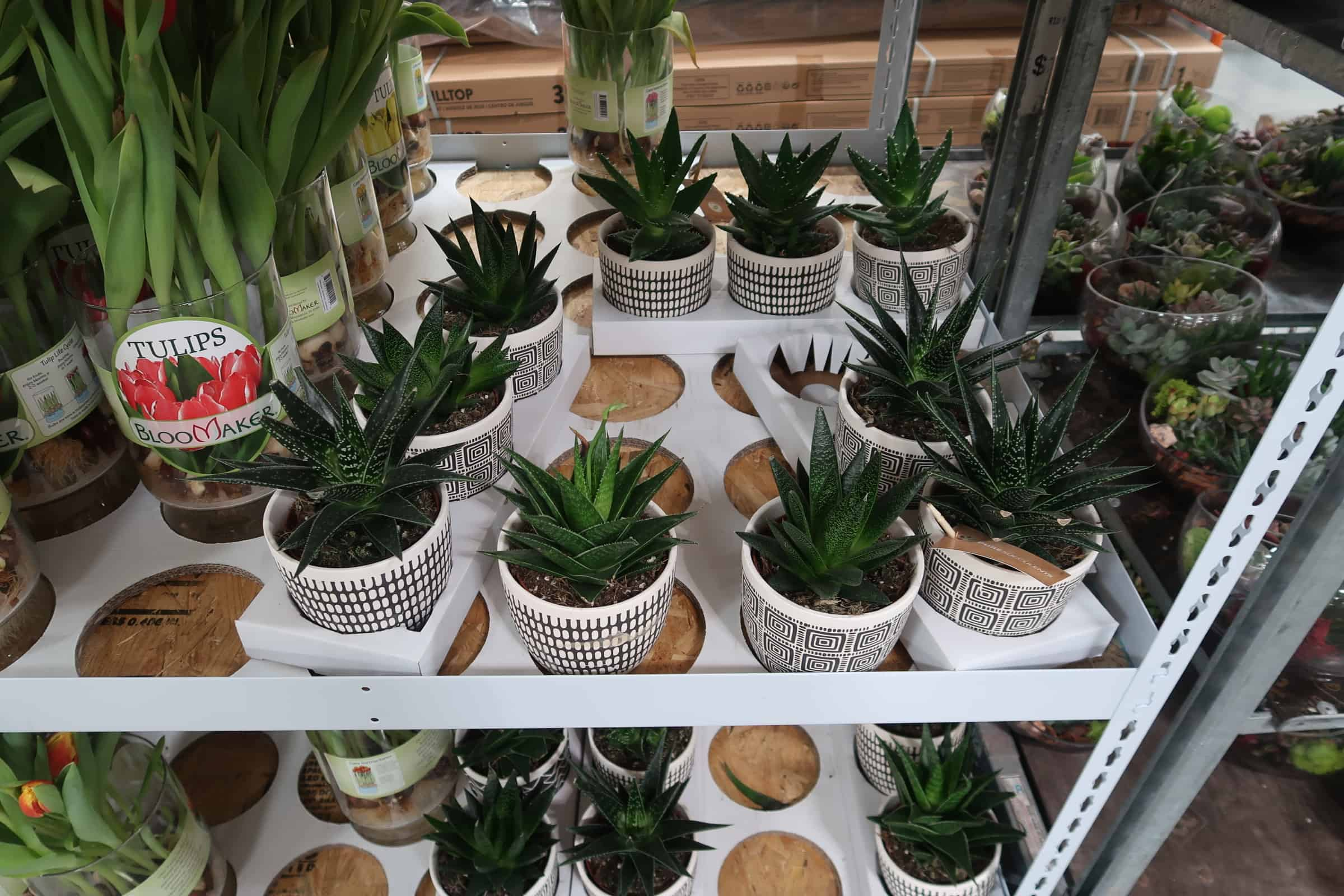 Fill Your Home With Succulents From Costco