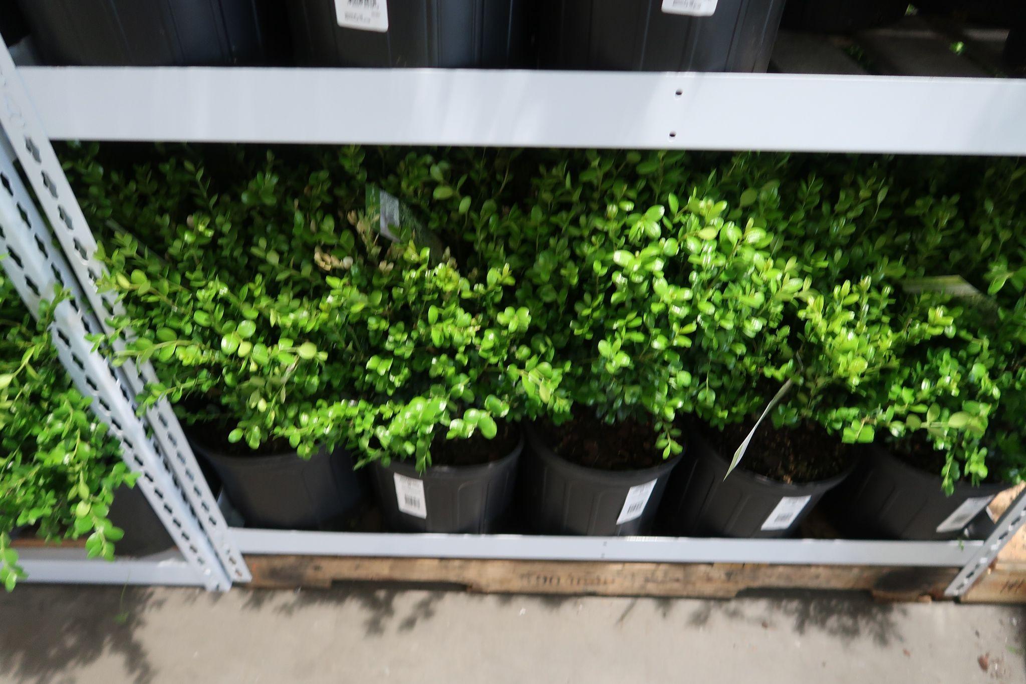 Boxwood Assorted Planters $19.99