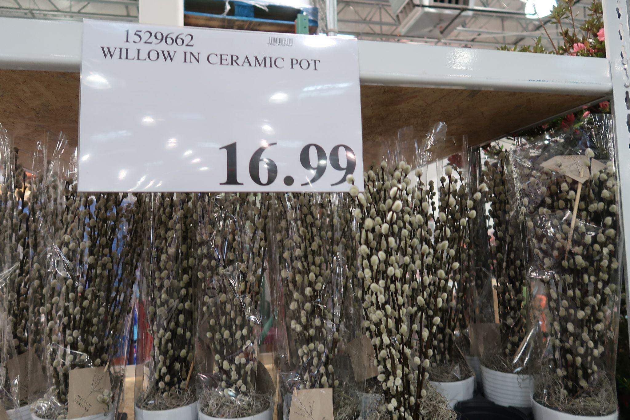 Willow Plants In Ceramic Pots $16.99