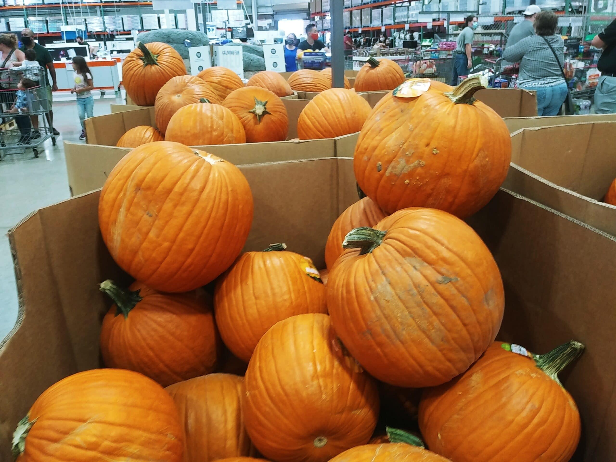 GO! Costco Has Pumpkins for $5.99